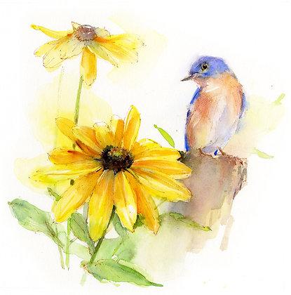 Eastern Bluebird w/Rudbeckia - 8x10