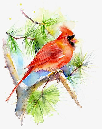 Cardinal on Pine Branch - Prints