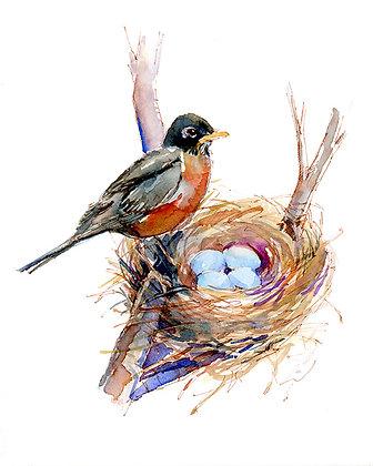 Robin w/Nest of Eggs - 8x10