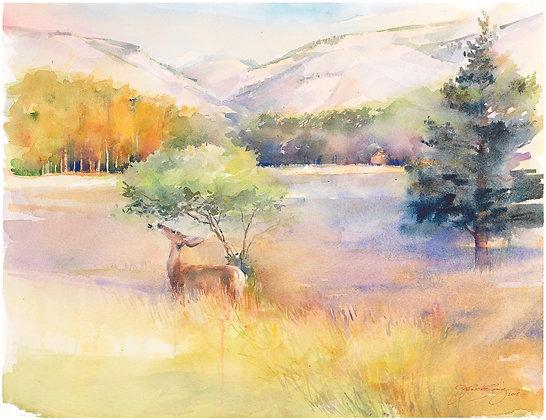 Deer in the Meadow at Snowy Range - Prints