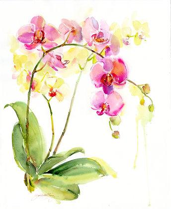 Orchids - Prints