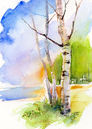 Birch Summer - Prints