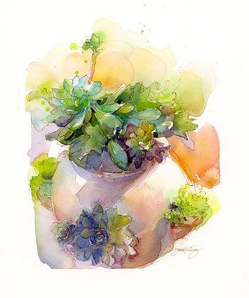 Sunny Succulents - Prints