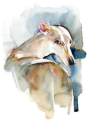Greyhound - Prints