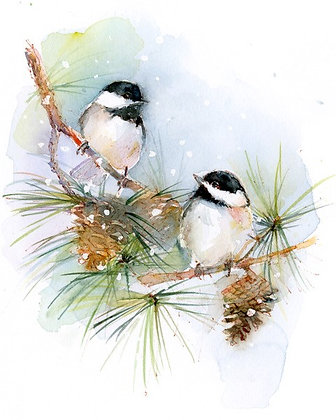 Chickadees on Pine Branch