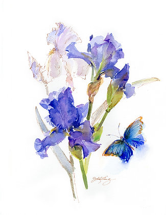 Purple Iris w/Blue Butterfly Botanical - Prints