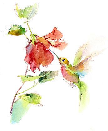 Hummingbird w/Hibiscus - 8x10