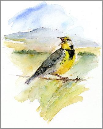 Meadowlark - 8x10