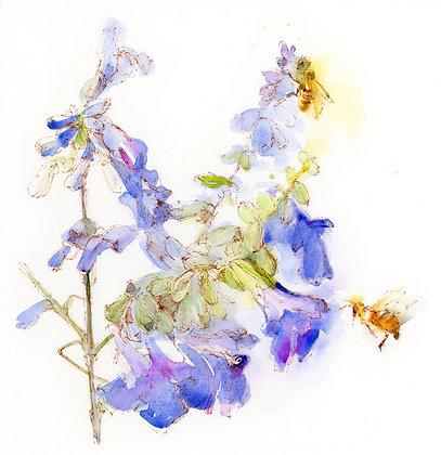 Sage w/Bees Botanical - Prints