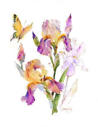 Gold & Purple Iris w/Butterfly Botanical - Prints