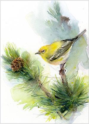Yellow Pine Warbler - 8x10