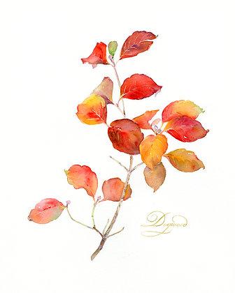Dogwood Botanical