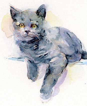 Gray Kitten - 8x10