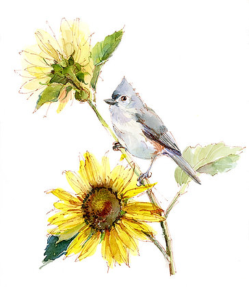 Tufted Titmouse w/Sunflower - 8x10
