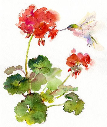 Red Geranium w/Hummingbird - 8x10