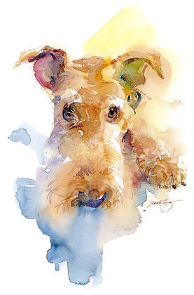 Airedale -  Prints