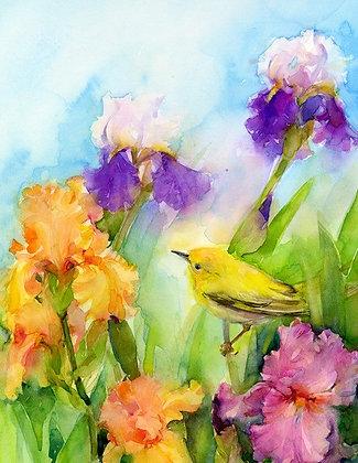Iris & Warbler