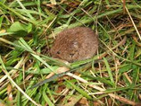 Coping with Voles