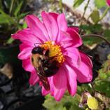 Creating a Pollinator Garden