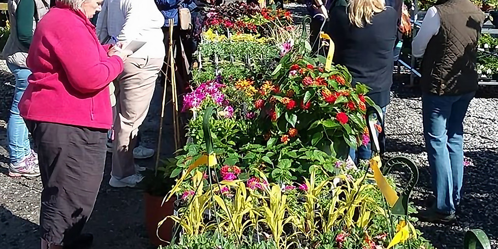 New and Exciting Annuals