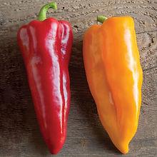 pepper corno_di_toro_ps.jpg