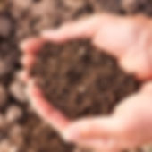 stock%20image%20soil_edited.jpg