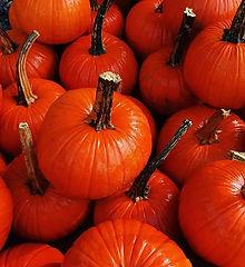 Did someone say #pumpkin spice__._.jpg