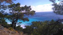 trees beach.jpg