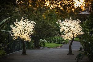 18m-LED-Light-Maple-Trees-17154-P1018281