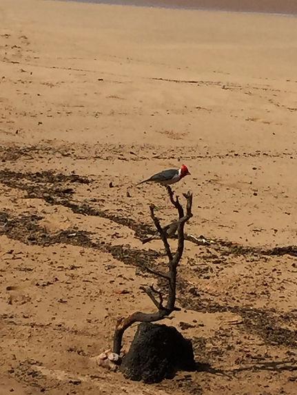 maui-sand-sculpture-4.jpg