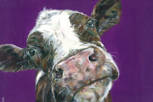 Soppy Cow