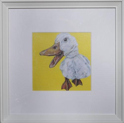 'Quackers'
