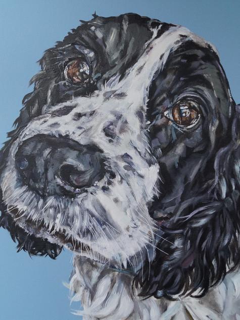 Bertie commissioned by P.Shearman April 2017