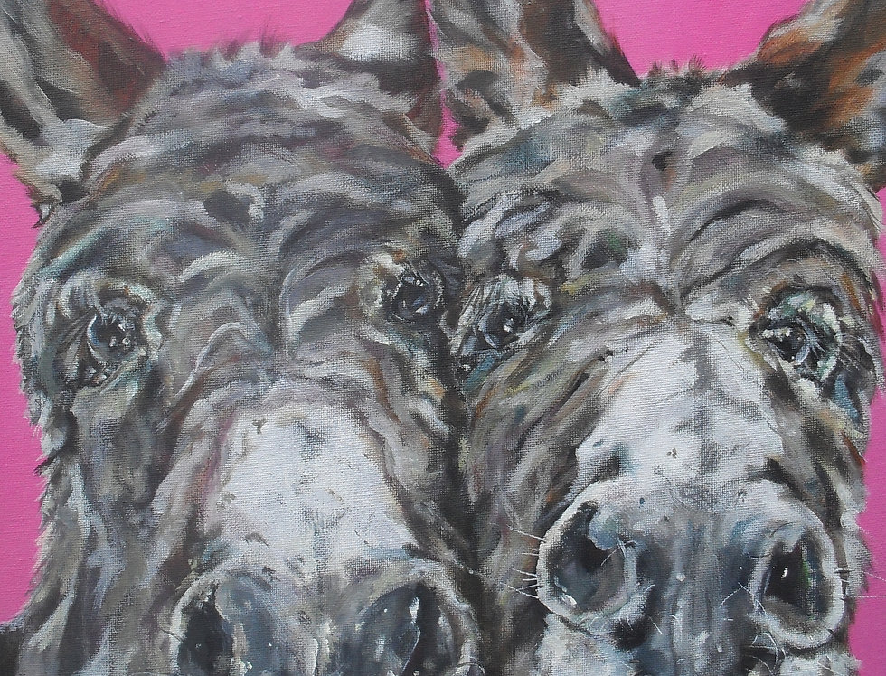 A Right Old Pair Of Donkeys