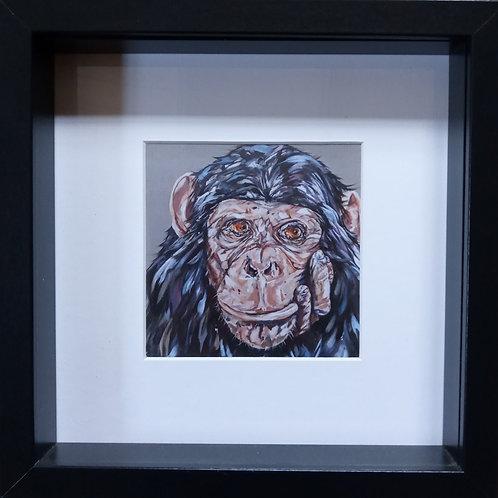 'I Don't Give A Monkey's'