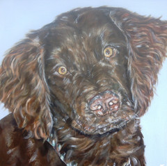 Charlie commissioned by J.Taylor April 2013