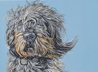 Percy Dog Portrait.jpg