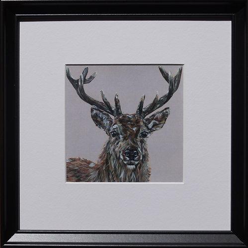 'Hello Deer'