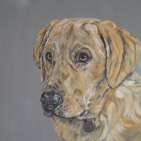 Albie commissioned by C.Morgan, Worcs, Dec 2020