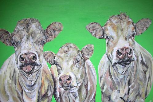 Daft Cows