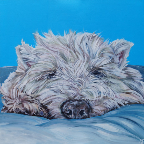 Snoozed commissioned by S.Gleeson July 2019