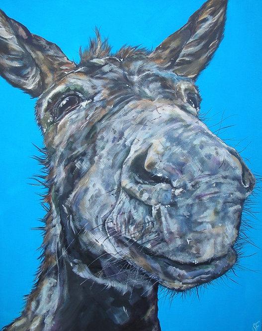 Donkey Oaty