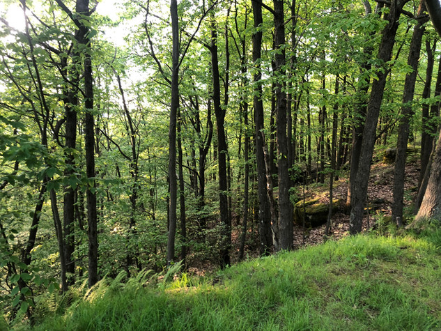 Trails at Jakes Rocks