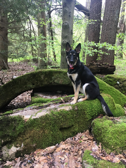 Timber Posing on a Hike