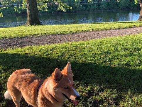 Riley Enjoying a Walk on the Path at Warren Hospital Grounds