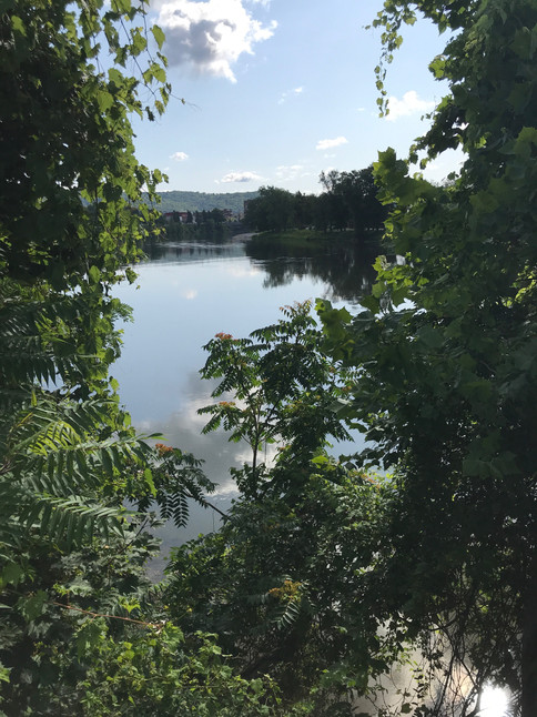 The Allegheny River Through the Trees