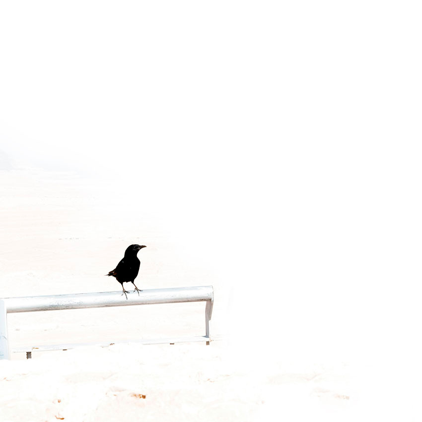 """Birds Series"""