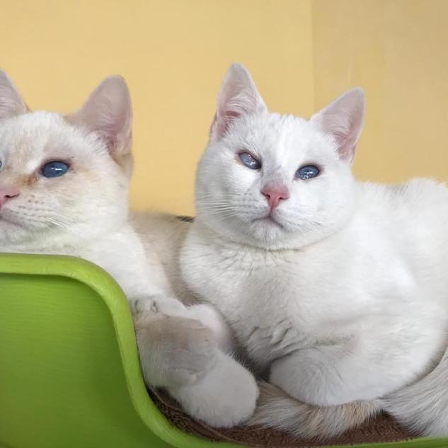 Khaleesi y Drogo