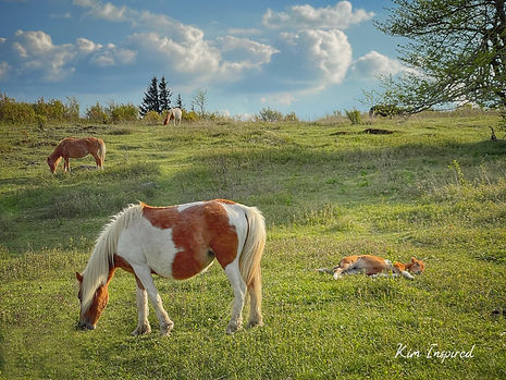 Mellow Herd.jpg