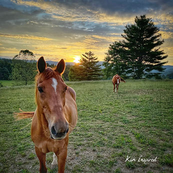 Horse Love.jpg
